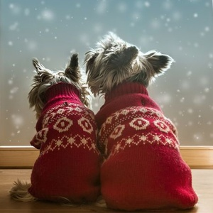 <strong>Christmas 2016</strong>: Find the best festive packages for you and your canine companion.
