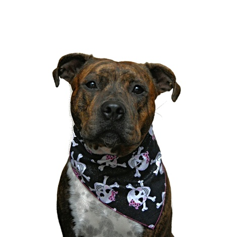 Pink Glitter Skulls Dog Bandana 2