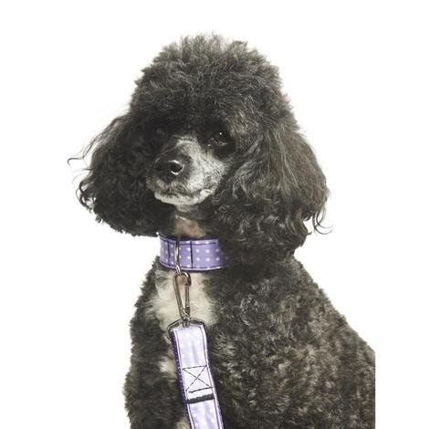 "Purple Polka Dot Collar  1"" Width 3"
