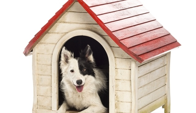 Nina's Nannies For Pets - Bedfordshire