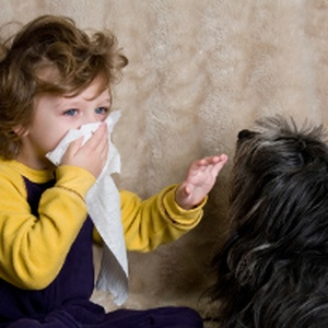 Pet allergies and how to manage them