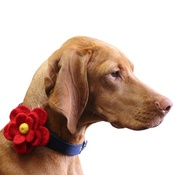 Love from Lola - Bloom Dog Collar Flower Accessory - Crimson & Yellow