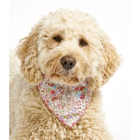 Petite Fleur Dog Bandana