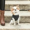 Aspen Dog Pullover - Grey 3