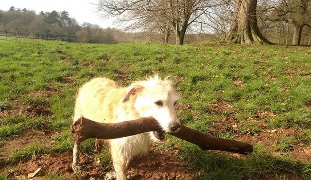 The London Dog Walker 4