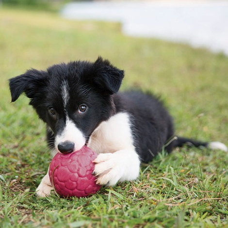 Zogoflex Air™ Boz Dog Ball – Blackcurrant 5