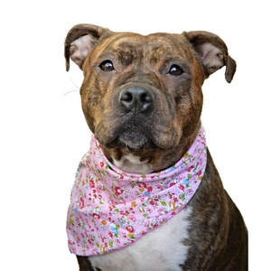 Pepper Dog Bandana
