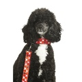 Queen of Hearts Dog Lead 2