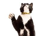 Yellow Zig Zag African Print Cat Collar 3