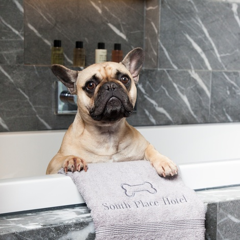 Personalised Pet Towel – Baby Pink 3