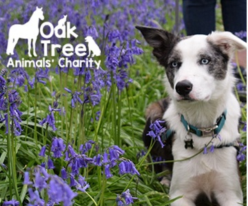 Oaktree Animal's Charity