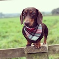 Alfies Plaid Bandana 2