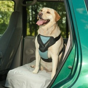 Bergan - Car Harness