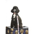 Sapphire Rose Dog Collar 4