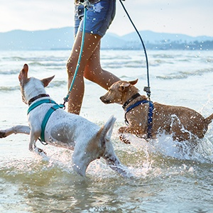 <strong>Coastal,Canines</strong>Explore our collection of handpicked coastal properties for you and your pup. Discover stunning sandy beaches and glistening oceans views on your next summer adventure.