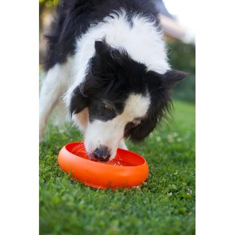 ThrowBowl Frisbee Water Bowl - Orange 3
