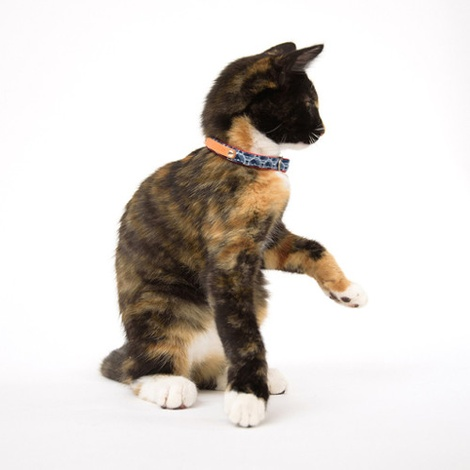 Shweshswe Navy Circles Cat Collar 2