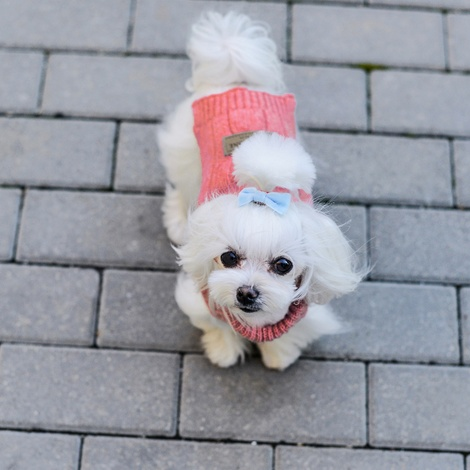 Aspen Dog Pullover - Pink 4