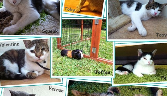 Kelly's Pet Care 3