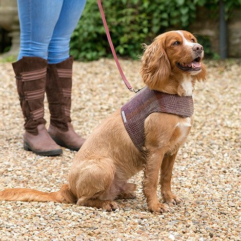 Grape Check Tweed Dog Harness 2