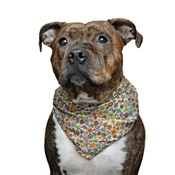 Pet Pooch Boutique - Orphelia Dog Bandana