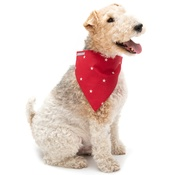 Mutts & Hounds - Cranberry Star Cotton Neckerchief