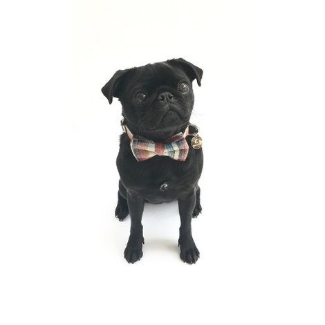 Collar and Bow Tie - Marple