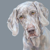 Paint My Dog  - Weimaraner Art Print