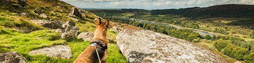Dog-friendly Highland