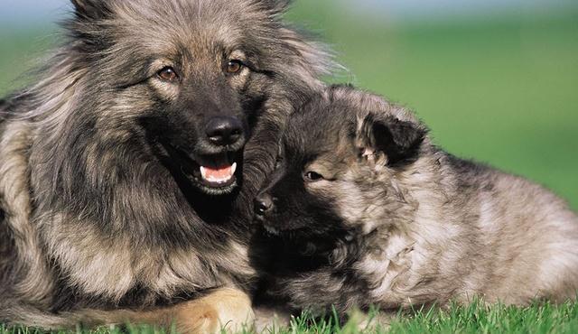 Top Dog Grooming