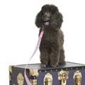 "Stanley Dog Lead 1"" Width 3"