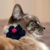 Love from Lola - Bloom Cat Collar Flower Accessory - Navy & Fuchsia