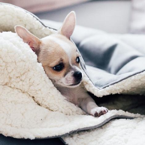 Silver Dog Sleeping Bag 4