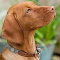 Slate Tweed Dog Collar 2