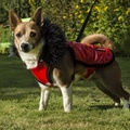 Brighton Bubble Hoodie Dog Coat - Red 4