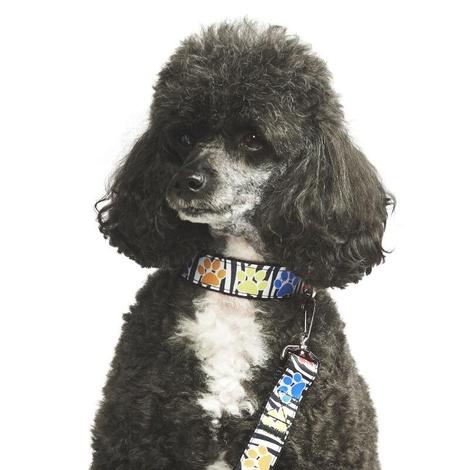 Paw Prints Dog Collar 2