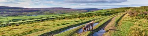 Dog-friendly Yorkshire