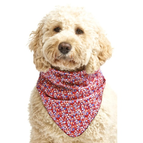 Superstar Dog Bandana