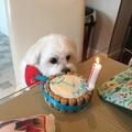 Mini Personalised Dog Cake 9