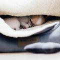 Silver Dog Sleeping Bag 5
