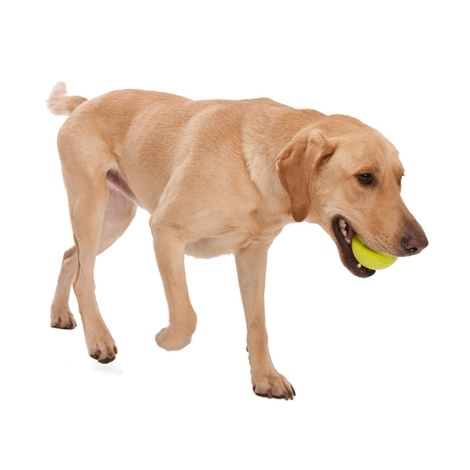 Zogoflex® Jive Dog Ball – Green