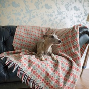 The Lounging Hound - Patterned Merino Wool Throw - Summer