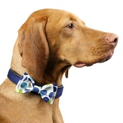 Love from Lola - Dog Collar Bow Accessory - Multi Spot