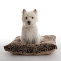 Pooch Pad Dog Pillow - Brown