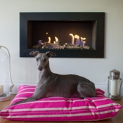 The Lounging Hound - Signature Cotton Dog Bed - Magenta