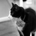 Bloom Cat Collar Flower Accessory - Yellow & Amber 3