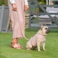 Stripe Pom Pom Dog Harness 4
