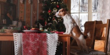 Christmas Dinner Dos & Don'ts for Pets