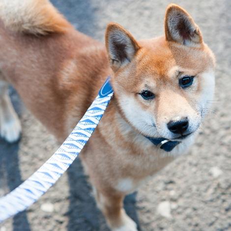 Blue Geo Classic Dog Lead 4
