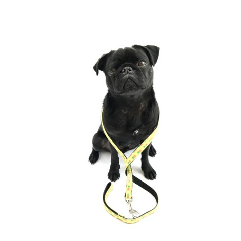 Dog Lead - Soho 5